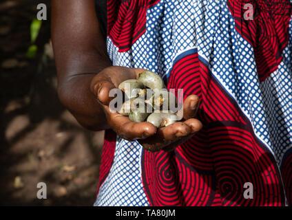 Donna africana con karite fresco in mano, Savanes distretto, Shienlow, Costa d'Avorio Immagini Stock