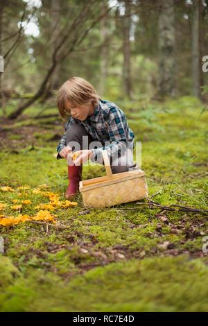 Ragazzo la raccolta di funghi in foresta Immagini Stock