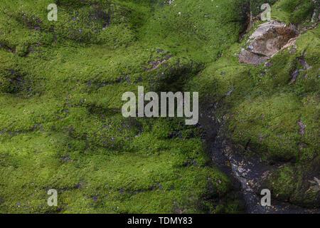 Vista da sopra sul verde muschio sulla roccia Immagini Stock