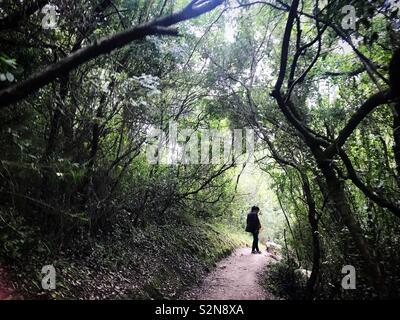 Una donna cammina nel bosco in Sierra de Grazalema, Andalusia, Spagna Immagini Stock