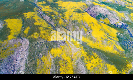 Fioriture di fiori selvaggi nella gamma Temblor, Carrizo Plain monumento nazionale, California Immagini Stock