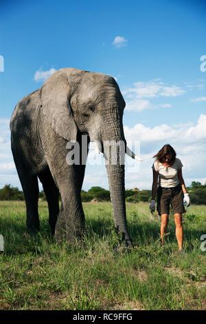 Donna matura in piedi accanto ad Elephant Immagini Stock