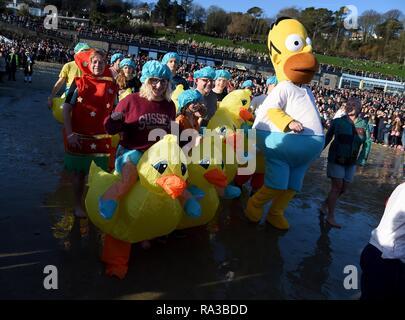 Lyme Regis, Dorset. Il 1° gennaio 2019. Anatre e di Homer Simpson, Lyme affondo, nuovi anni nuotare, Lyme Regis, Dorset Credito: Finnbarr Webster/Alamy Live News Immagini Stock