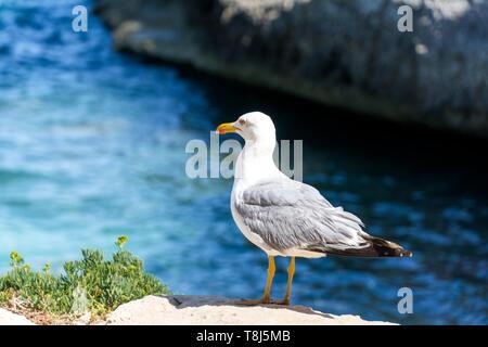 Seagull in piedi sulle rocce dal mare, Spagna Immagini Stock
