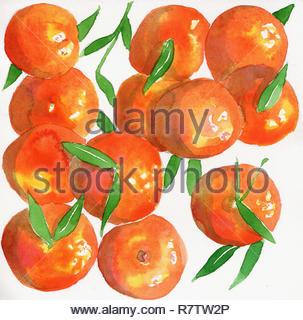 La pittura ad acquerello di arance satsuma Immagini Stock