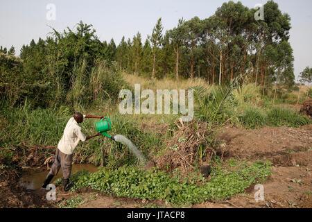 Agricoltore Apollo Byarunga ha ricevuto due prestiti da ENCOT microfinanza, Uganda, Africa Immagini Stock