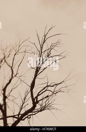 Albero nudo in silhouette. Moody e natura poetica scena. Rami scuri e sky. Immagini Stock
