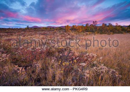 Dovre, Norvegia, Settembre 13th, 2018. I colori autunnali a Fokstumyra riserva naturale, Dovre, Norvegia. Credito: Oyvind Martinsen/ Alamy Live News Immagini Stock