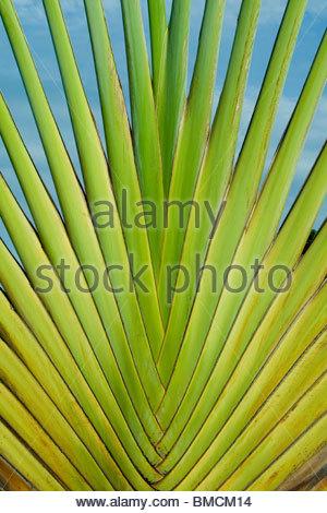 ABSTRACT di pianta tropicale in Kerala, TRIVANDRUM Immagini Stock