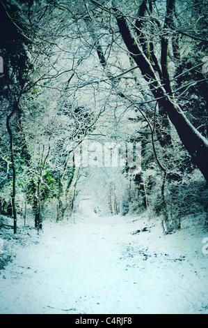 Coperta di neve percorso attraverso i boschi Immagini Stock