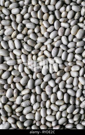 Essiccato di fagioli bianchi Macro Immagini Stock