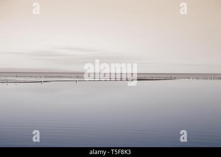 La colonia di allevamento di stormi di uccelli a Salton Sea in California. Immagini Stock