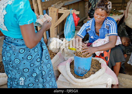 Arrosto e sole-essiccati i bruchi in vendita al mercato Soweto, Lusaka. Immagini Stock