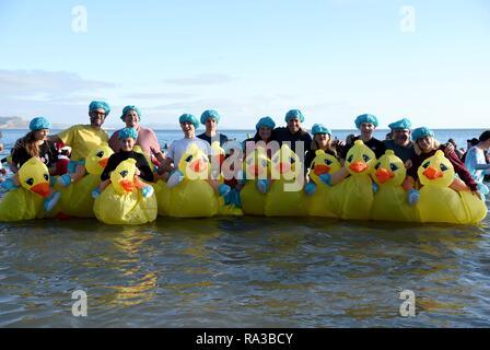 Lyme Regis, Dorset. Il 1° gennaio 2019. Anatre godetevi il swim, Lyme affondo, nuovi anni nuotare, Lyme Regis, Dorset Credito: Finnbarr Webster/Alamy Live News Immagini Stock
