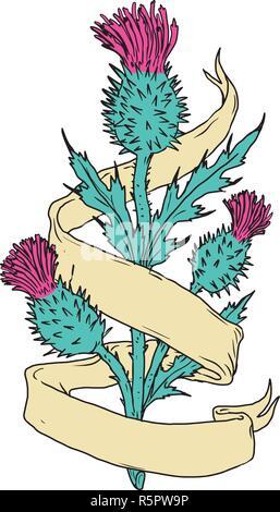 Disegno a colori stile sketch illustrazione di un scozzese o Scotch thistle con nastro o scorrere avvolgere sulla isolato sullo sfondo bianco. Immagini Stock