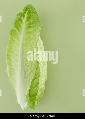 Le foglie di lattuga sul pallido sfondo verde Immagini Stock