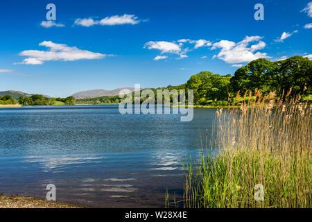 Regno Unito, Cumbria, Hawkshead, maneggio, canne a bordo del Esthwaite Acqua su Beatrix Potter natura a piedi, guardando verso Scandale cadde Immagini Stock