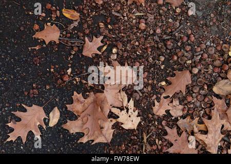 Foglie di autunno a terra Immagini Stock