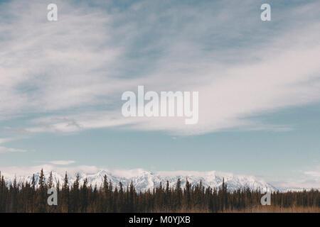 Alberi vicino alla montagna innevata gamma Immagini Stock