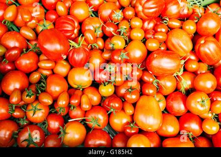 I pomodori in misure assortite Immagini Stock