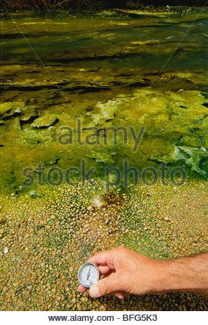 Calore-amare i batteri prosperano in acqua al di sopra di 60 gradi C vicino a sorgenti calde, a Rotorua, Nuova Zelanda Immagini Stock