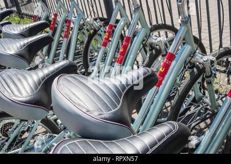 Sedi di biciclette. Biciclette stand in una fila sullo sfondo. Immagini Stock