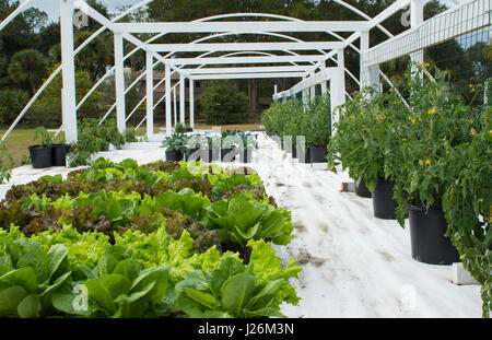 Central Florida home organico giardino con piante e verdure in cortile per una sana dieta e mangiare agriturismo Immagini Stock