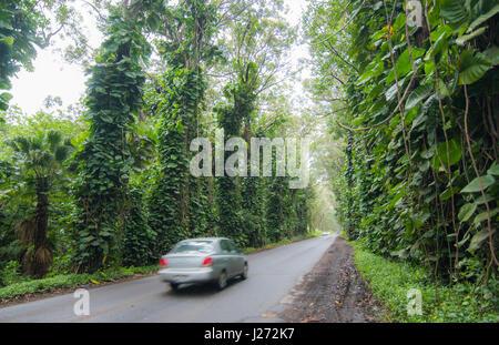 Koloa Kauai Hawaii auto in movimento su scenic palms autostrada lungo la Hawaii autostrada panoramica Immagini Stock