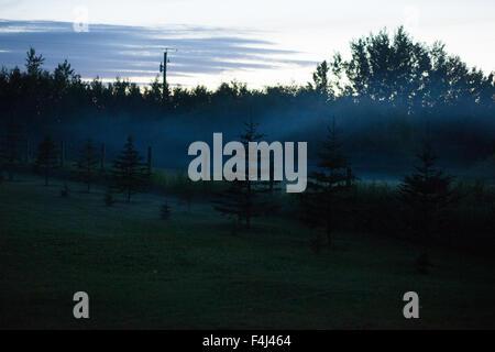 Nebbia appesa sopra gli alberi Immagini Stock