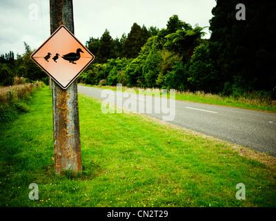 Attenzione madre di anatra e di anatroccoli, cartello stradale, Nuova Zelanda. Immagini Stock