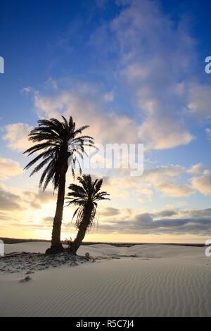 Capo Verde, Boavista, Rabil, Viana Desert Immagini Stock