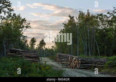 I registri sulla piantagione di canna in canna, Maine. Immagini Stock