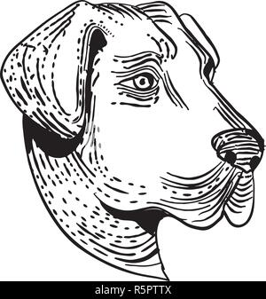 Lo stile di attacco illustrazione della testa di un anatolica cane pastore, una montagna di razza del cane che protegge il bestiame visto dal lato fatto su scraperboard sc Immagini Stock