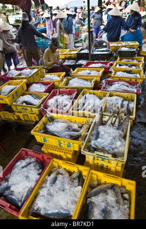 Il Vietnam, Hoi An, Mattina mercato del pesce, pesce ricoperto di ghiaccio in cestelli di plastica Immagini Stock