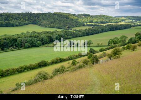 Campagna accanto al villaggio di Turville nella Chiltern Hills. Buckinghamshire, Inghilterra Immagini Stock