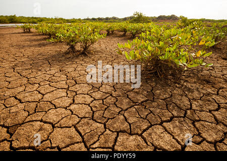 Incrinato il terreno e la vegetazione nel deserto di Sarigua national park, Herrera provincia, Repubblica di Panama. Immagini Stock