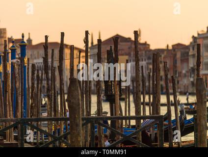 Pali di legno sul canal grande, regione Veneto, Venezia, Italia Immagini Stock