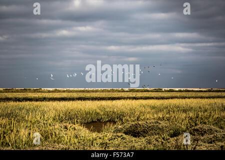 Gabbiani bianco contro un cielo tempestoso Immagini Stock