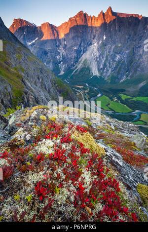 In autunno la mattina in valle Romsdalen, Møre og Romsdal, Norvegia. La pianta rossa è di montagna Avens, Dryas octopetala. Immagini Stock