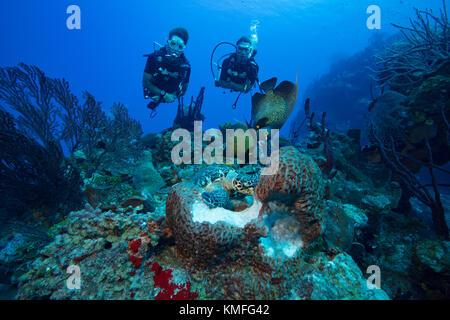 I subacquei guardare l'interazione di diverse specie di vita marina come hanno accesso alla stessa fonte alimentare. Immagini Stock
