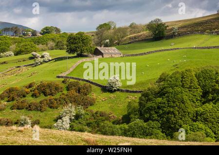 Regno Unito, Cumbria, York, Frostrow e Soolbank, basso campo Fawes fienile in pianura terreni agricoli a colombaia Gill Immagini Stock