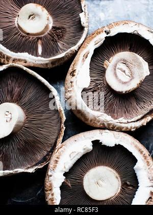 Close up di quattro funghi champignon Immagini Stock