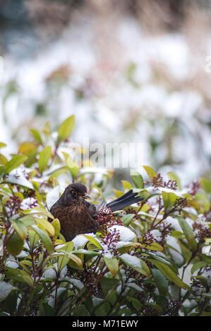 Alimentazione degli uccelli nel giardino di inverno Immagini Stock