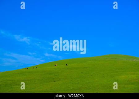 Prato con bel cielo azzurro sfondo con spazio di copia Immagini Stock