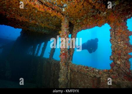 Scuba Diver esplora il relitto di Vandenberg, key west. Immagini Stock