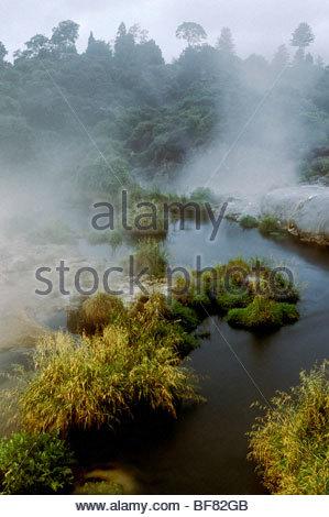 Area geotermica, a Rotorua, Nuova Zelanda Immagini Stock