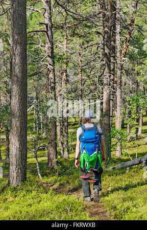Trekker trekking nella foresta in Urho Kekkonen National Park, Lapponia, Finlandia. Immagini Stock