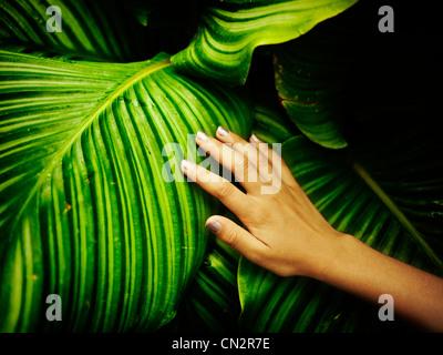 La mano della bambina sulla foglia in casa tropicale. Immagini Stock
