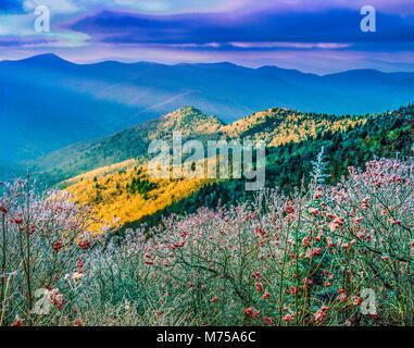 Vertice Icced alberi, montaggio stato MItchell Park, North Carolina , Blue Ridge Parkway Immagini Stock