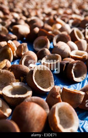Gusci di noce di cocco di essiccazione al sole Immagini Stock